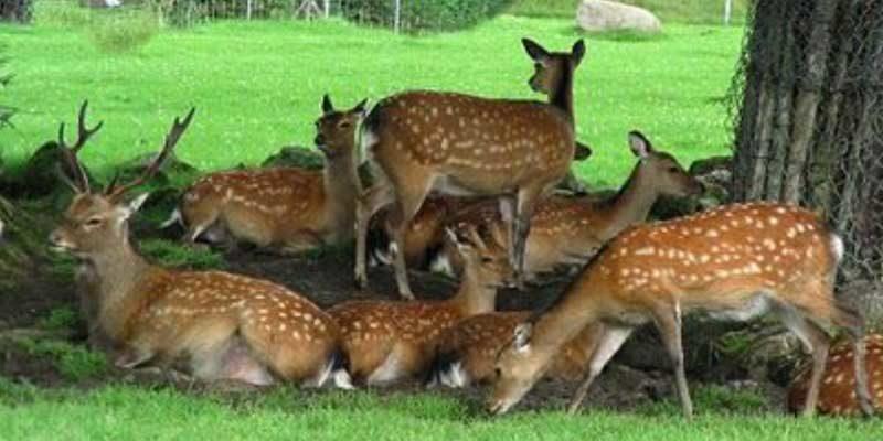 Deer-Park-1
